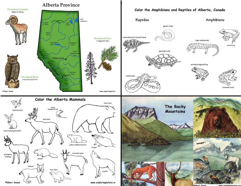Canada Albertas Animals And Habitats Mini Posters Coloring And