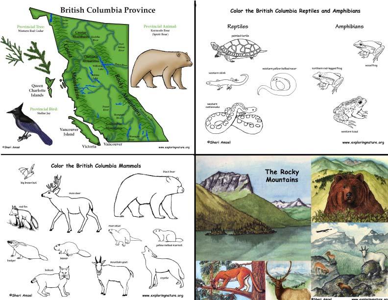 Canada British Columbia S Animals And Habitats Mini