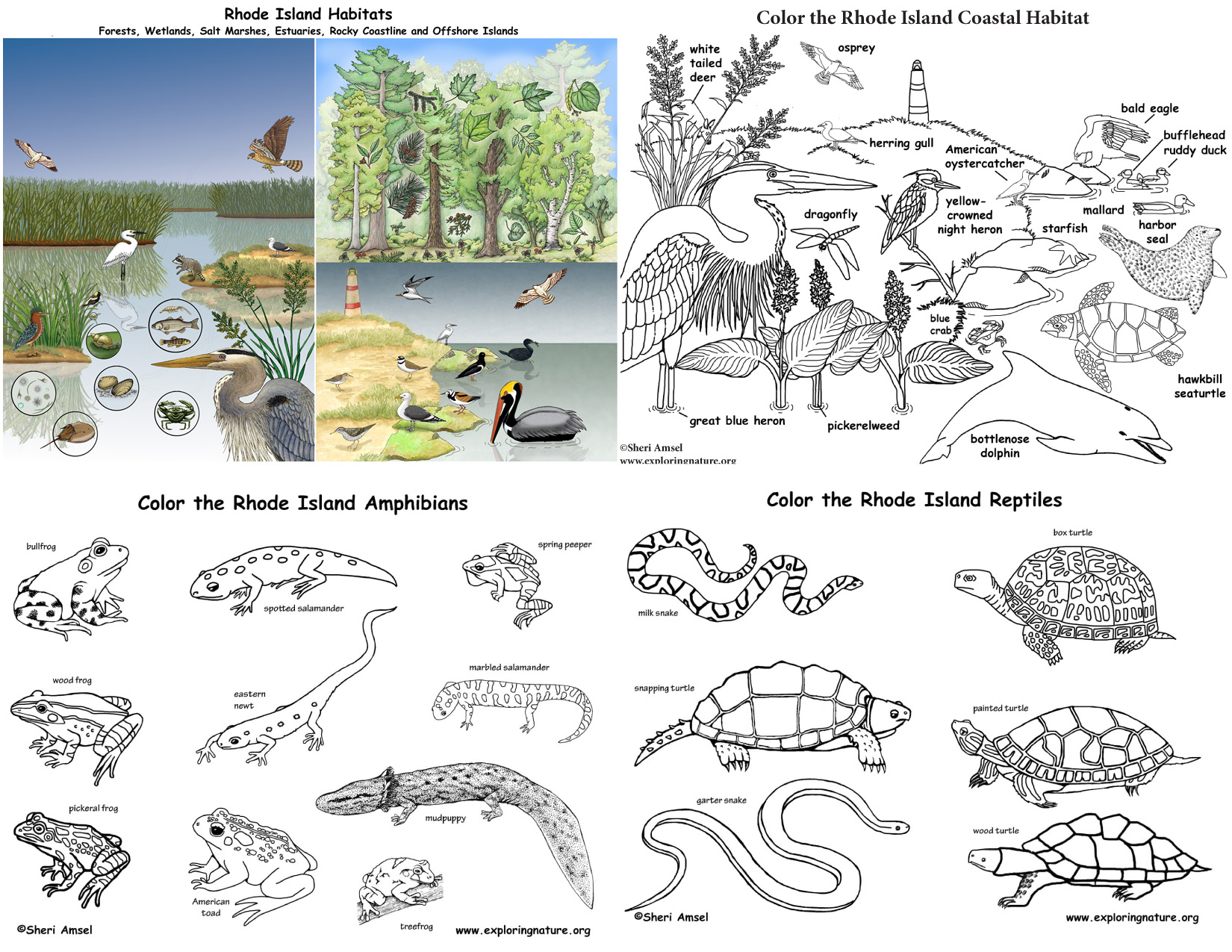 Rhode Island S Animals And Habitats Bundle Downloadable Only