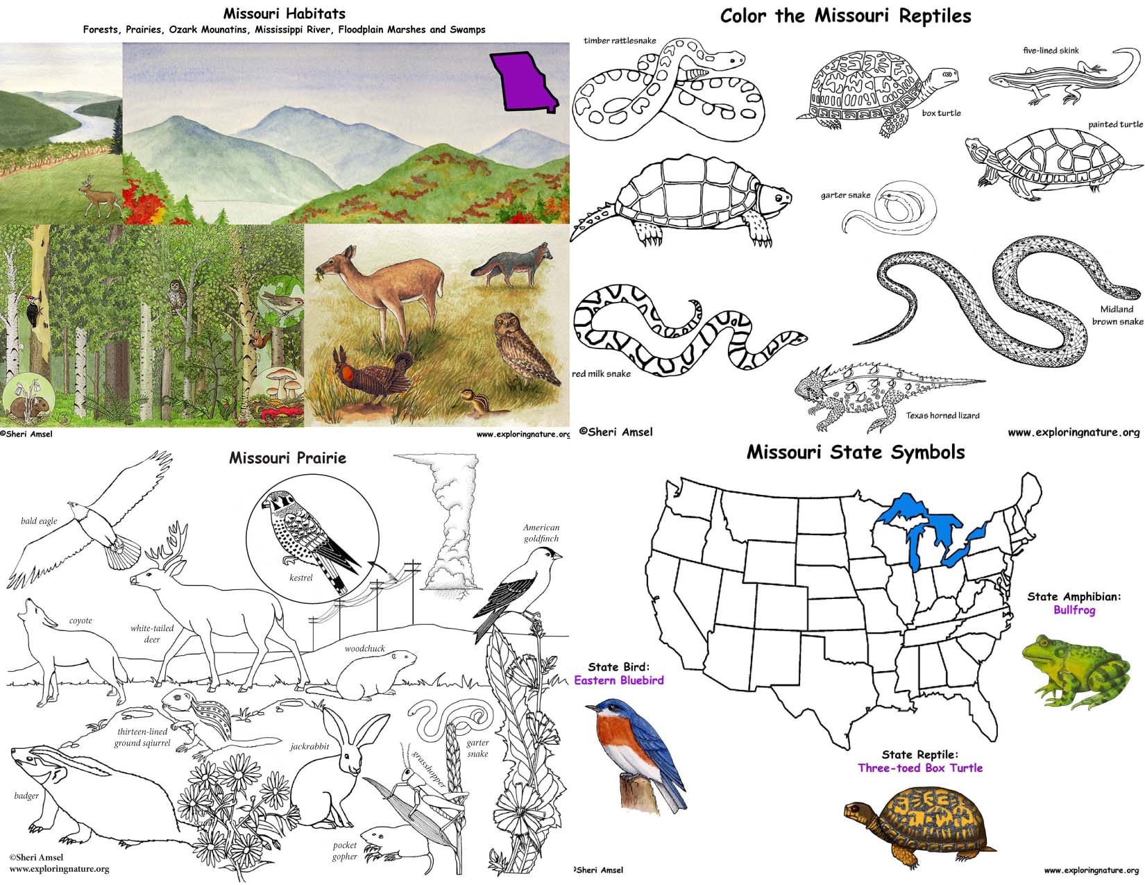 Missouris animals and habitats bundle downloadable only buycottarizona